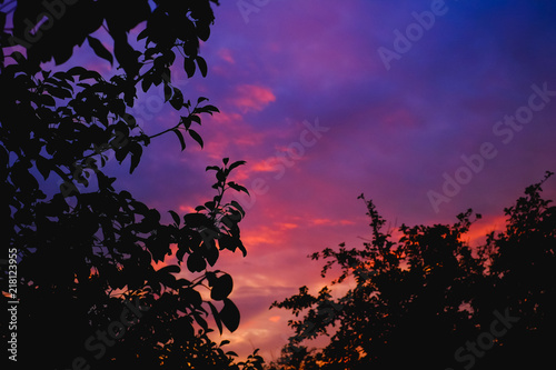 Foto op Plexiglas Crimson Silhouette of the forest in the night sky