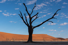 Beautiful Black Silhouette Tree In Desert With Sand Dunes, Deadvlei, Namibia