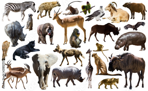 Birds, mammal and other animals of Africa isolated Canvas-taulu