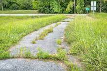Overgrown Bike Trail