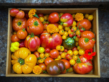 Freshly Picked Heirloom Tomato Harvest: Pear Shaped, Beef Heart, Tigerella, Brandywine, Cherry, Black Put In Wooden Box With Edible Nasturtium Amd Marigold Flowers