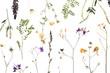 Leinwanddruck Bild - Dried meadow flowers on white background, top view