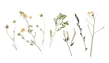 Dried Meadow Flowers On White ...