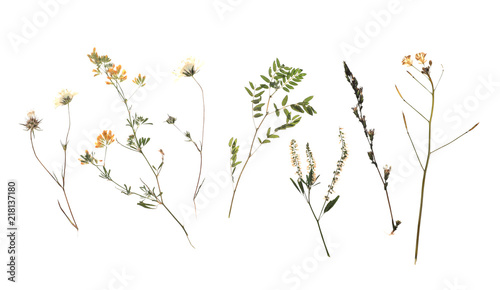 Fototapeta Dried meadow flowers on white background, top view obraz