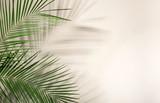 Fresh tropical date palm leaf on light background