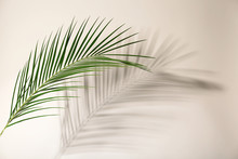 Fresh Tropical Date Palm Leaf On Light Background