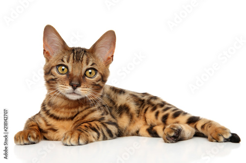 Bengal kitten on white background Canvas Print
