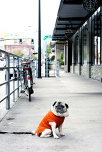Pug On A Sidewalk