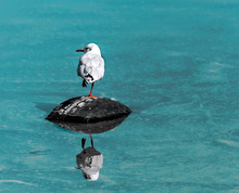 Single Small White Seagull Bird Sitting On Old Black Rubber Car Tire In Sea With Specular Reflection In Water. Copy-space. The Concept Of Environmental Pollution