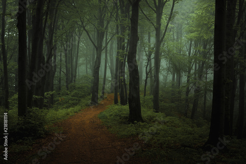 Fototapeten Wald Dreamy foggy dark forest. Trail in moody forest. Alone and creepy feeling in the woods