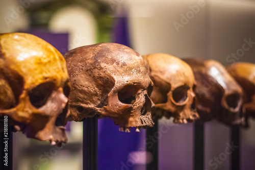 Photo Selective focus, row of skulls without mandible