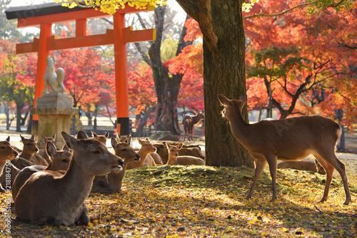 Fotografering 奈良の紅葉