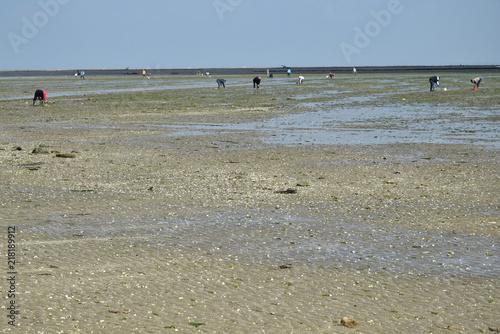 Fotografía  Pêcheurs à pied, à marée basse, au passage du Gois à Noirmoutier, Vendée, Pays de la Loire, France