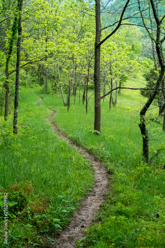 path in the forest in spring on the Appalachian Trail