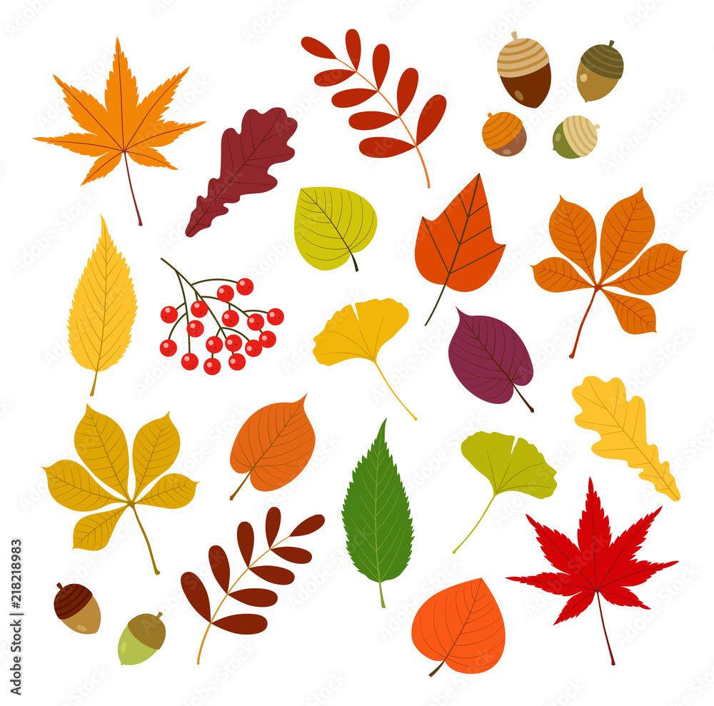 Fototapeta 秋の紅葉と木の実set