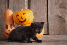 Black Little Cat With Hallowee...