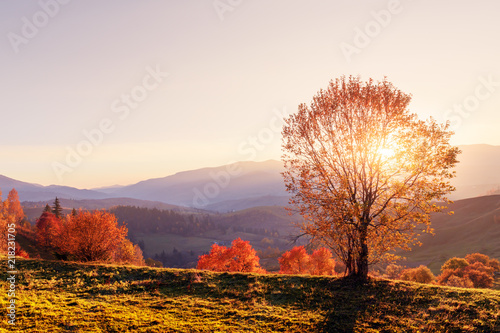 Foto op Aluminium Wit Amazing scene on autumn mountains. Yellow and orange trees in fantastic morning sunlight. Carpathians, Europe. Landscape photography