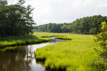 Creek Through Salt Marsh