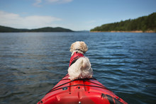 Kayaking Pup