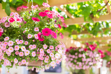 Baskets In A Hanging Flower Ga...