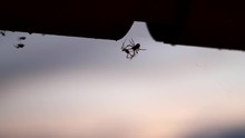 A Silhouette Of Two Spiders Fi...