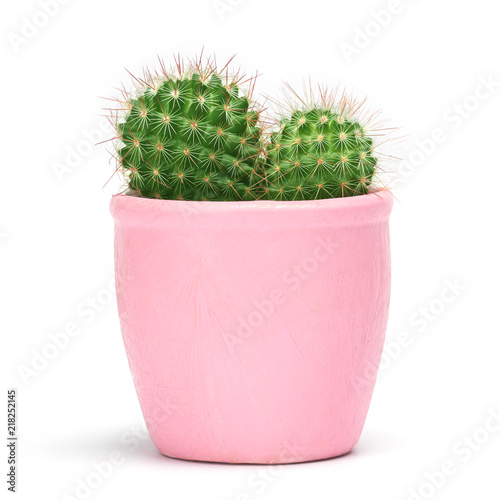 Cactus isolated with clipping path. Closeup Cacti front view in pink ceramic pot white background. Collection.
