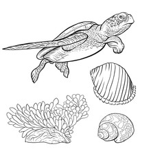 Sea Collection. Original Hand Drawn. Vector Illustration. Outline Hand Drawing.  Isolated On White Background.