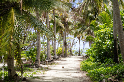 Fényképezés Palm trees and path on a tropical island