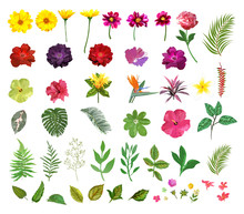 Floral Set. Collection With Isolated Colorful Hand Drawn Garden
