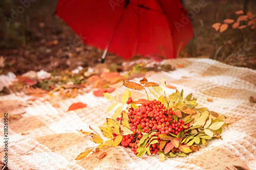 Autumn scene plaid with bunches of rowan berries with leaves bouquet on yellow grass and red umbrella