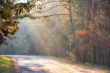 droga wiejska we mgle oświetlona promieniami słońca