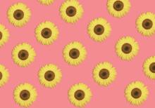 Bloom  Pattern From  Sunflower...