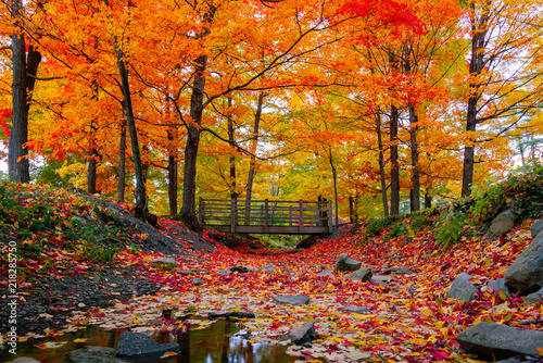 Stickers pour porte Orange eclat Beautiful fall foliage in the northeast USA