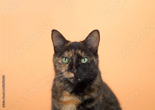 Fotografia  Portrait of one tortie torbie tabby cat on an orange background