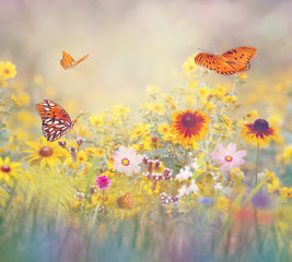 Fototapeta Wiejski Butterflies in a meadow