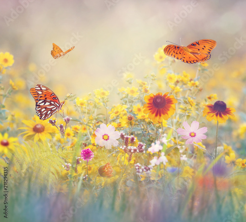 Wall Murals Meadow Butterflies in a meadow