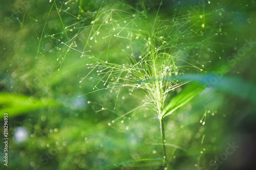 Spoed Foto op Canvas Natuur Beautiful Green Flowers in nature background. select focus