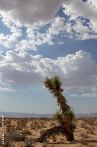 Fotografie, Obraz  Mojave, Mojave Desert, Mojave Desert California