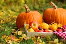 Autumn Harvest In Warm Tones.Two Large Pumpkins,box With Apples, Physalis, Chestnuts And Yellow Leaves On A Lawn In Warm Sunlight.Autumn Abundance. Autumn Mood