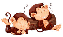 Two Monkey Sleeping At The Log