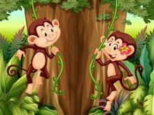 Monkey Hanging From Vine