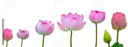 Deurstickers Waterlelies Collection of Isolated pink lotus on a white background , A beautiful pink lotus from Thailand