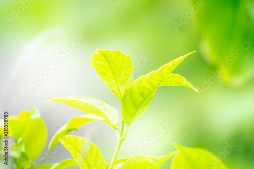 Foto auf Leinwand Gelb Close up green leaves with greenery backgroud and copy space for text.