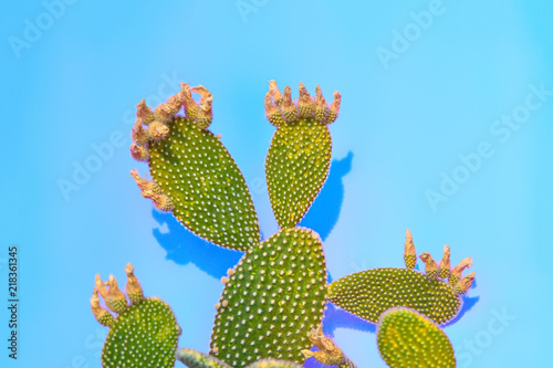 Tropical Neon Green Cactus on Blue background. Minimal Concept. Contemporary Art gallery Style