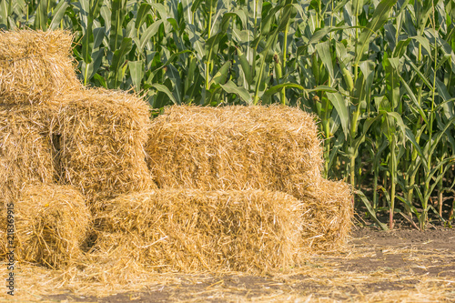 Valokuva Straw square bale against a green field of corn, bales of hay on a country road