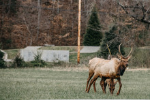 Elk NC