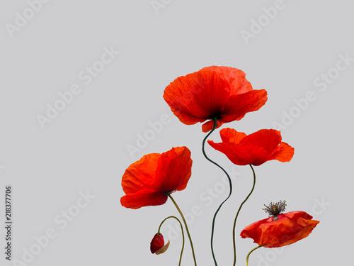 Obrazy szare szare-maki-z-kolorowym-akcentem