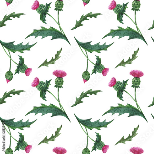 Photo Watercolor thistle seamless pattern