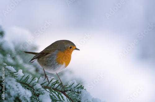 Fotomural Rouge-gorge en hiver