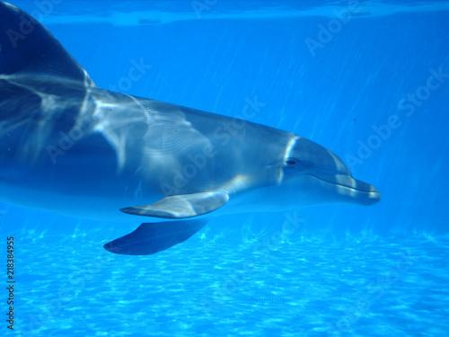 Foto op Plexiglas Panoramafoto s Delfín mular